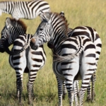 The Ultimate Guide to Kenya Backpacking